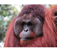 Mr.Orangutan Photographic Print