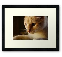 Blue eyed Cat Framed Print