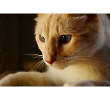 Blue eyed Cat Photographic Print