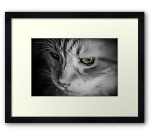 Cat Looking At Camera Framed Print