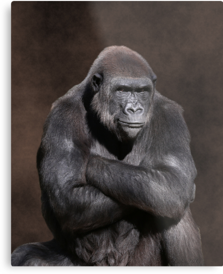 Gorilla with Attitude Metal Print