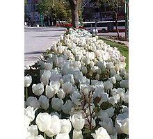 Tulips in Konya Photographic Print