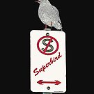 Superbird, Seagull on pole by Mary Taylor