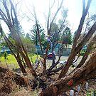 *Til Death us do part - Car Park, Port Fairy, Vic. Australia by EdsMum