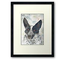 Watchful Kelpie Framed Print