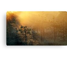 11.6.2016: Cold Summer Morning Canvas Print
