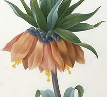 Fritillaire Imperiale by Bridgeman Art Library