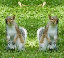 Squirrels by George Davidson