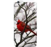 Winter Cardinal - Icy Tree iPhone Case/Skin