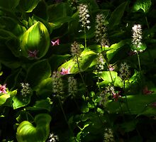 Dappled Light by Tibby Steedly