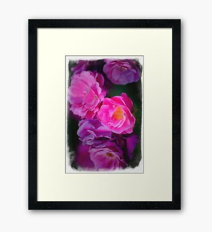 Roses In Watercolor Framed Print