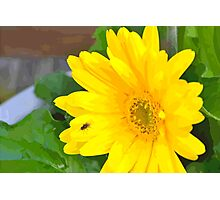 Bright Flower Photographic Print