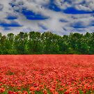 poppy field by Enri-Art