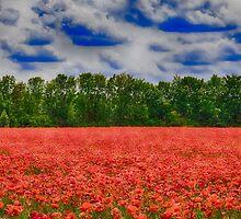 poppy field by Enri-Art