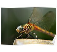 Yes, I Love Dragonflies Poster