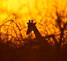 Golden silhouette giraffe by brians101
