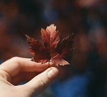 First leaf of the season. by strangerandfict