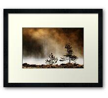 15.5.2014: Pine Trees Framed Print