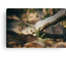 Refraction of life. Canvas Print