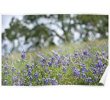 Lupin Meadow Poster