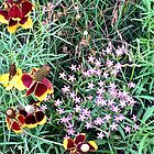 Beauties in the Wild by AspenWillow