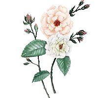 Rose I, Peach Cream on White by ThistleandFox
