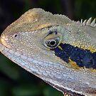 Water Dragon Lizard - Up Close by stevealder