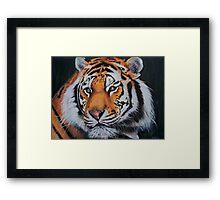 The Tiger, 2010 Framed Print