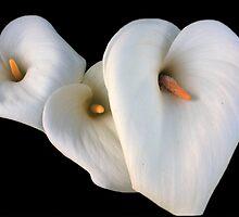 Three Lilies by aidan  moran