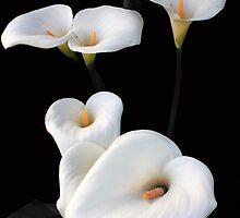 Lilies by aidan  moran