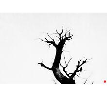 Natural art Photographic Print