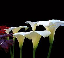 Lilies In Spring by aidan  moran