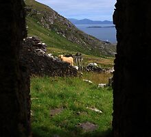 View From A Lighthouse Ruin  by aidan  moran