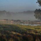 Early morning at the waterhole by Deborah McGrath