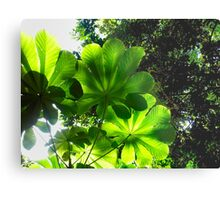 Colombia - Jungle in the north coast Metal Print
