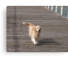 Leading his owner a walk down the Jetty, Henley Beach, Adelaide. Canvas Print