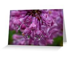 Lilacs In The Rain Greeting Card