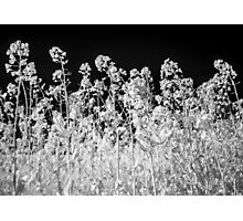 Infra-Red Field Photographic Print