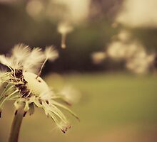 Soft and free by g7visuals