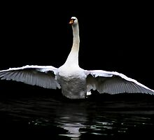 Swansong by Brian Avery