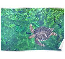 turtle swim Poster