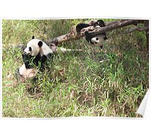 Mommy and Baby Panda Poster