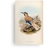 Birds of Asia John Gould 1883 V1 V7 360 Podoces Biddulphi Canvas Print