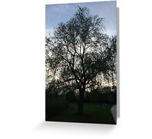 Sunset on Willow Greeting Card