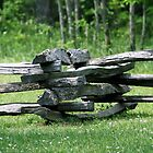 Split Rail fence by goldnzrule