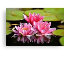 Water Lilly Triplets Canvas Print