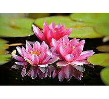 Water Lilly Triplets Photographic Print