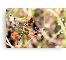 Black-tailed Skimmer Dragonfly Metal Print