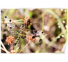 Black-tailed Skimmer Dragonfly Poster