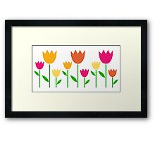 Fresh cute colorful Tulips isolated on white Framed Print